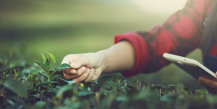 transformação digital gestão agrícola